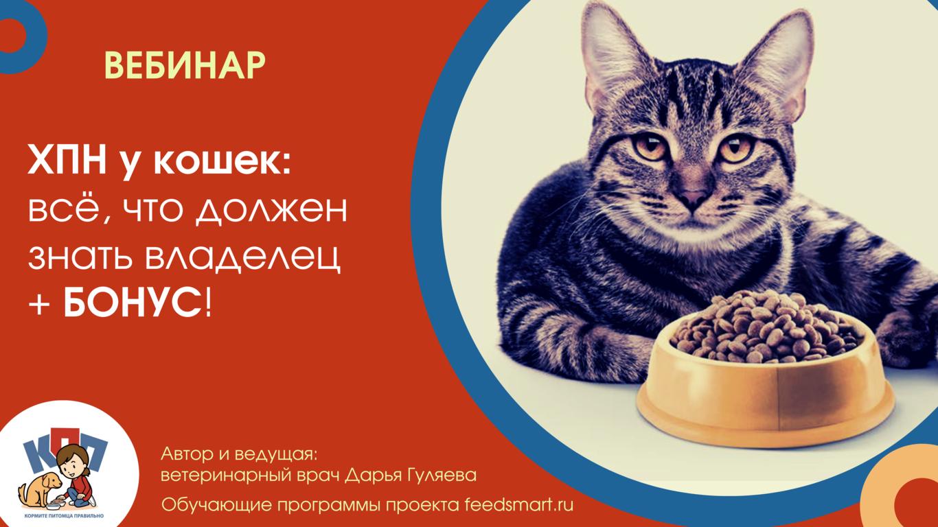 ХПН у кошек: всё, что должен знать владелец + БОНУС!