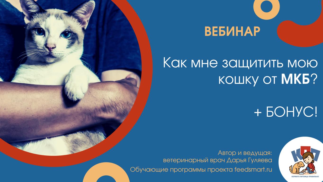 Как мне защитить мою кошку от МКБ?