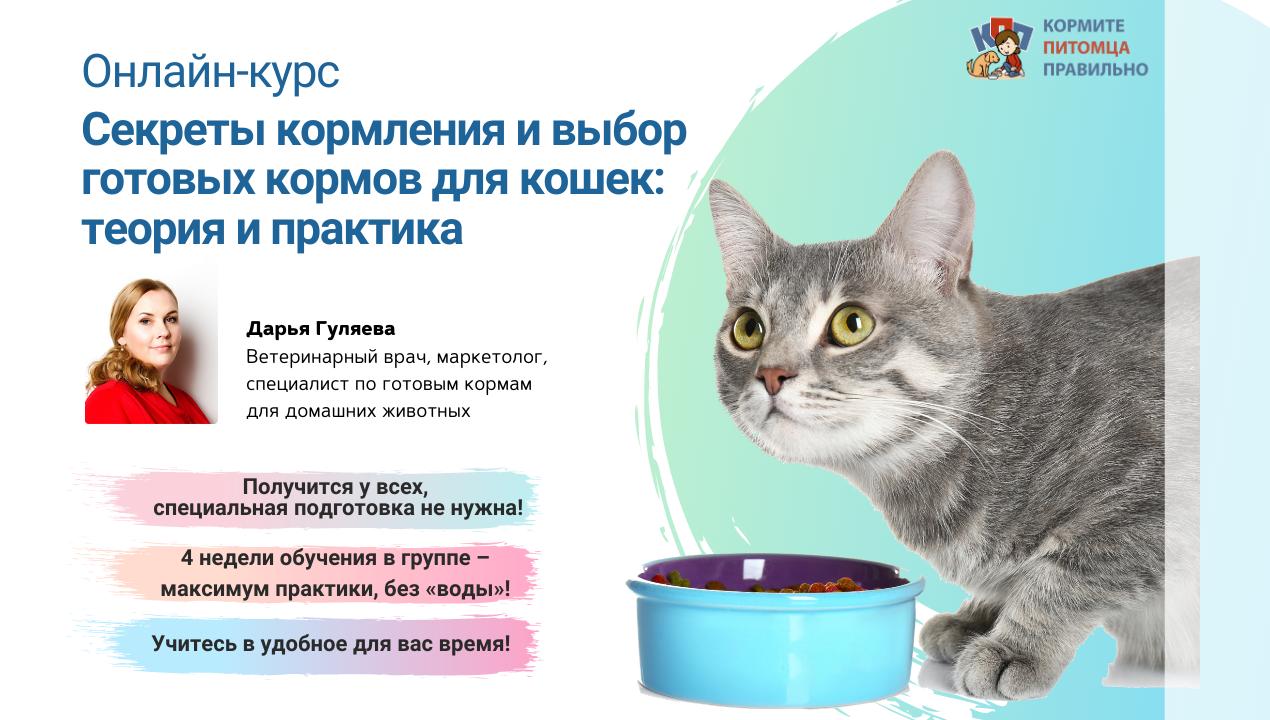 Секреты кормления и выбор готовых кормов для кошек